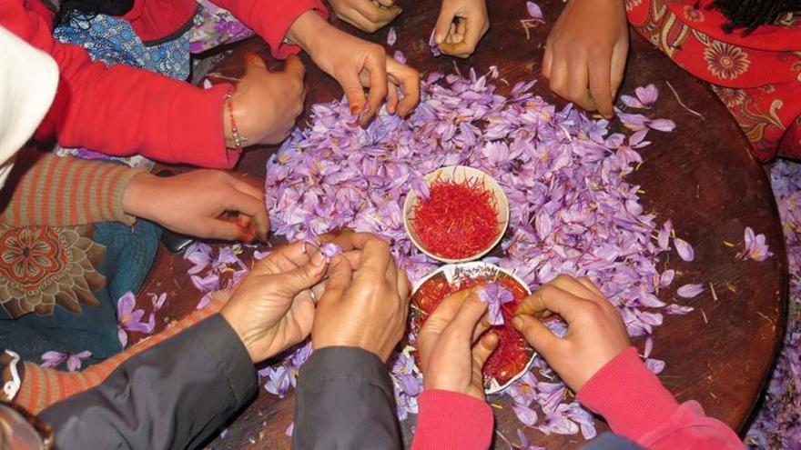 El cultivo del azafrán es un asunto de familia en Marruecos