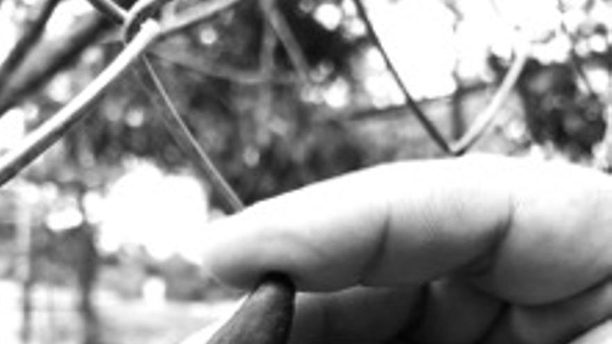 Animales rescatados del tráfico ilegal de especies en Colombia
