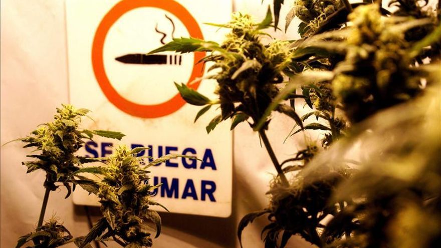 El Senado uruguayo aprobará la legalización de la marihuana sin cambios en la ley