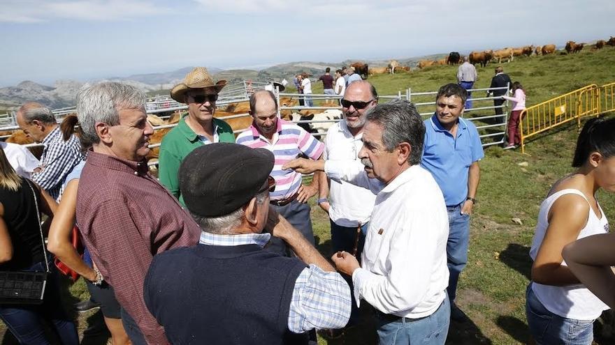 Revilla destaca en los Machucos (Arredondo) el esfuerzo del Gobierno cántabro para recuperar la vaca pasiega