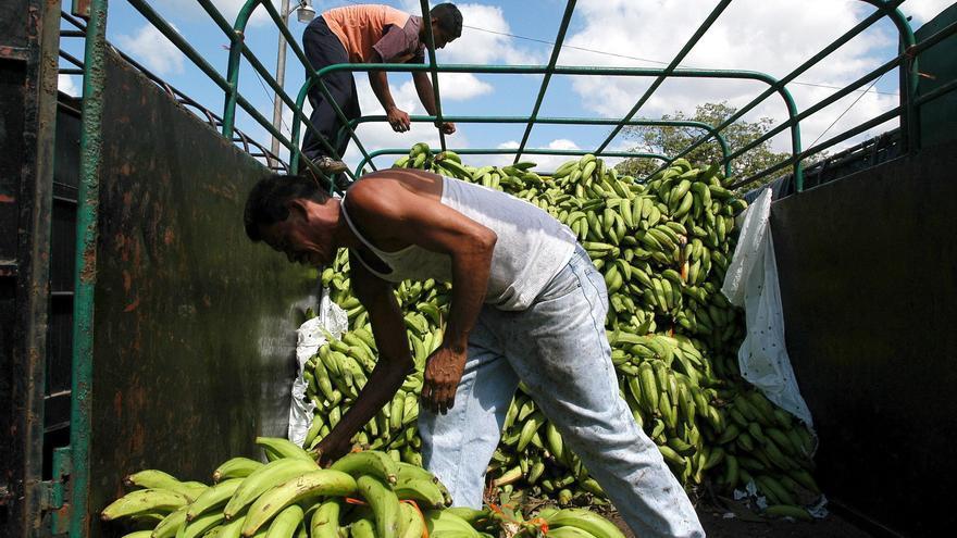 El sector bananero de Ecuador busca una relación más solida con Asia