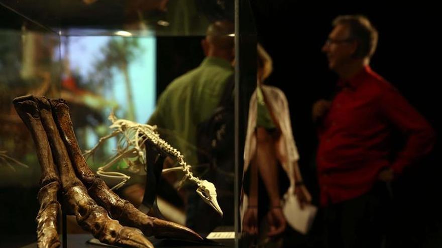 Barcelona exhibe reproducción del dinosaurio carnívoro más grande del planeta