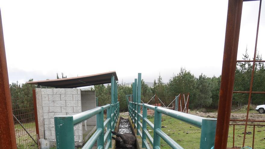 Una de las yeguas encontradas sin vida en Oia, Pontevedra