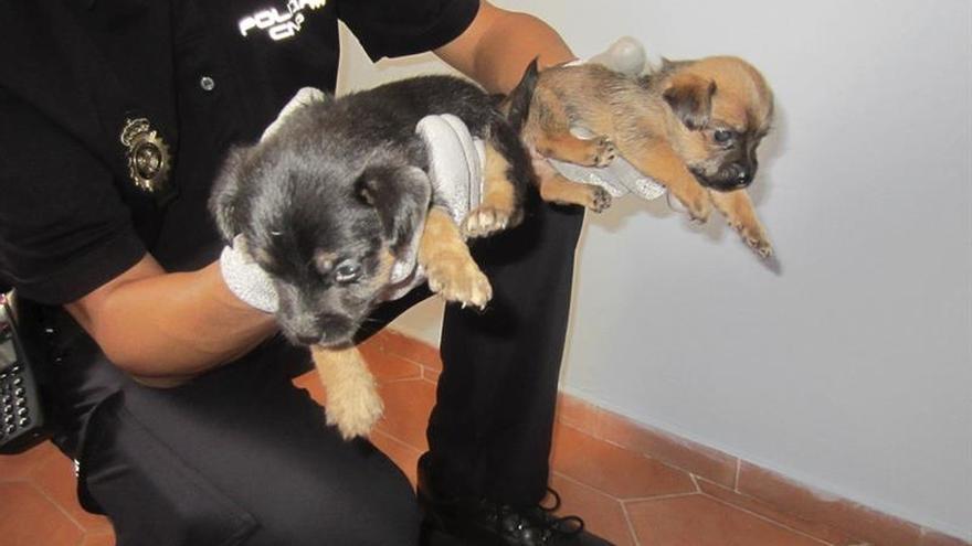 Tres detenidos por vender por internet cachorros en condiciones muy precarias