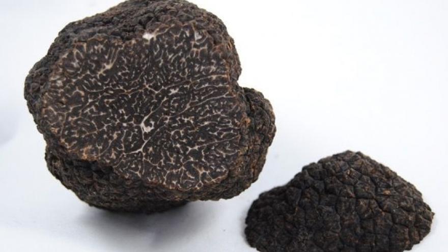 En Sarrión se obtiene gran parte de la producción española de trufa negra