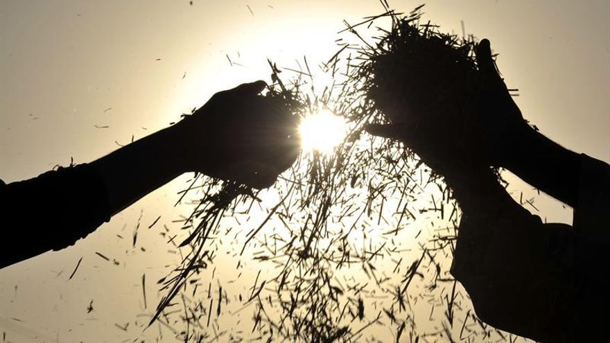 Vista de dos agricultores que separan el grano de la paja en las afueras de Saná, Yemen.