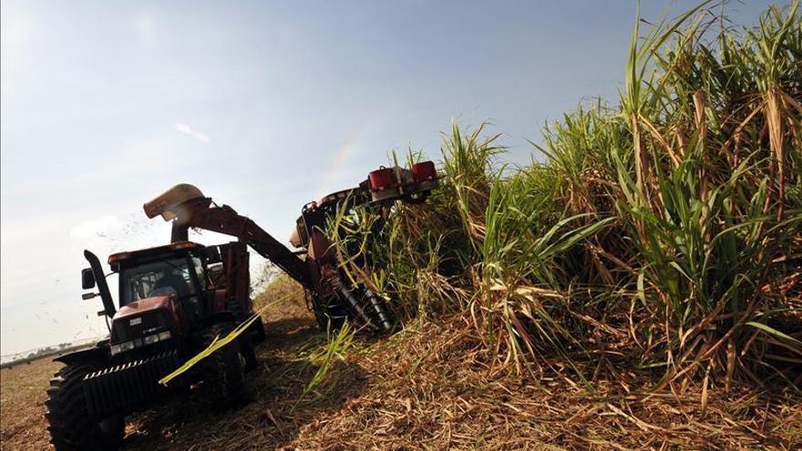 Cuba inicia la cosecha azucarera con deseo de mejorar los resultados de esta década