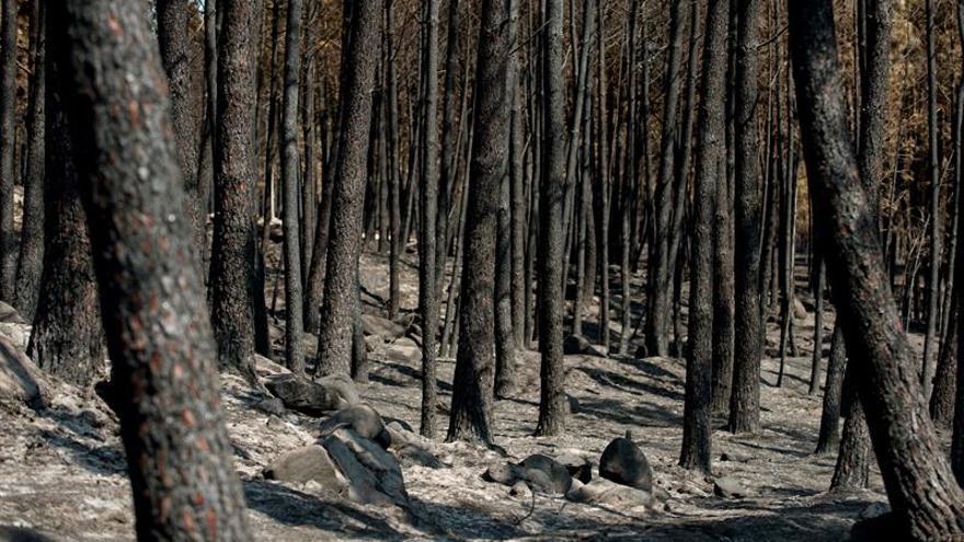 Estabilizado el incendio de Vilariño de Conso tras quemar unas 100 hectáreas