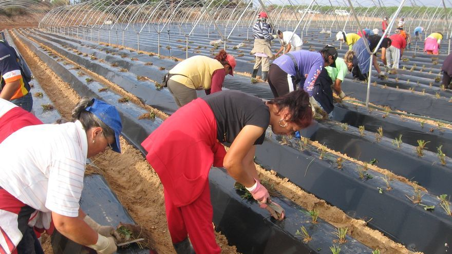 Jornaleros en una de las plantaciones de fresa en la localidad onubense de Lepe (Huelva).
