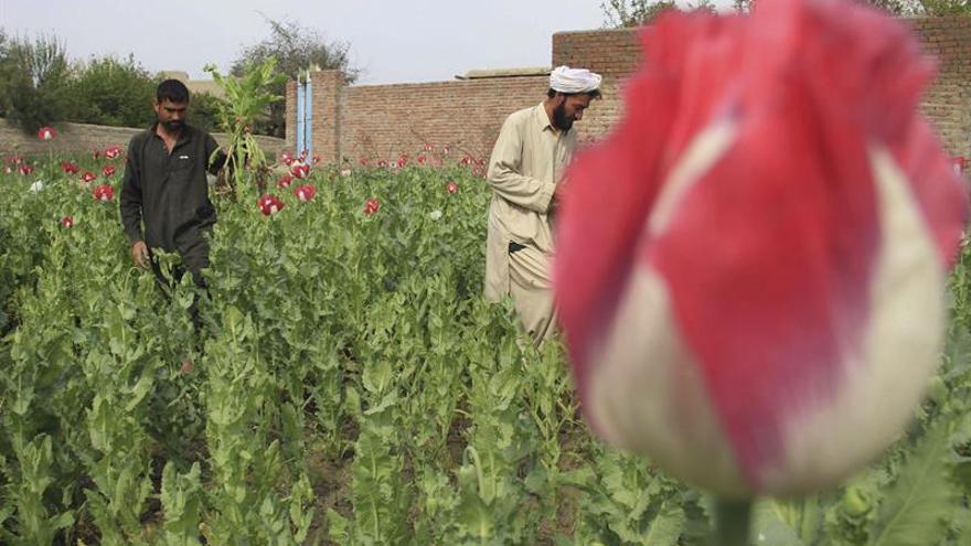 Afganistán abre otra guerra, pero contra el narguile y el tabaco aromático