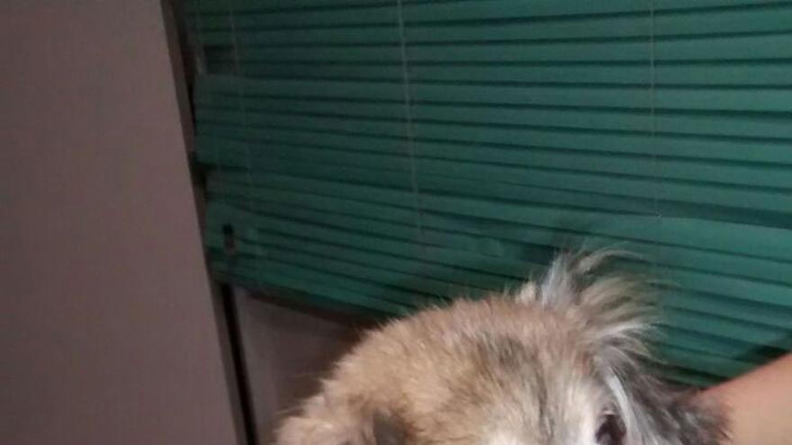 Rita, una perra abandonada en Albacete