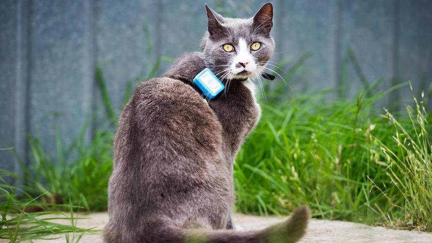 Los gatos domésticos tienen un gran impacto en la fauna local, según un nuevo proyecto de ciencia ciudadana.