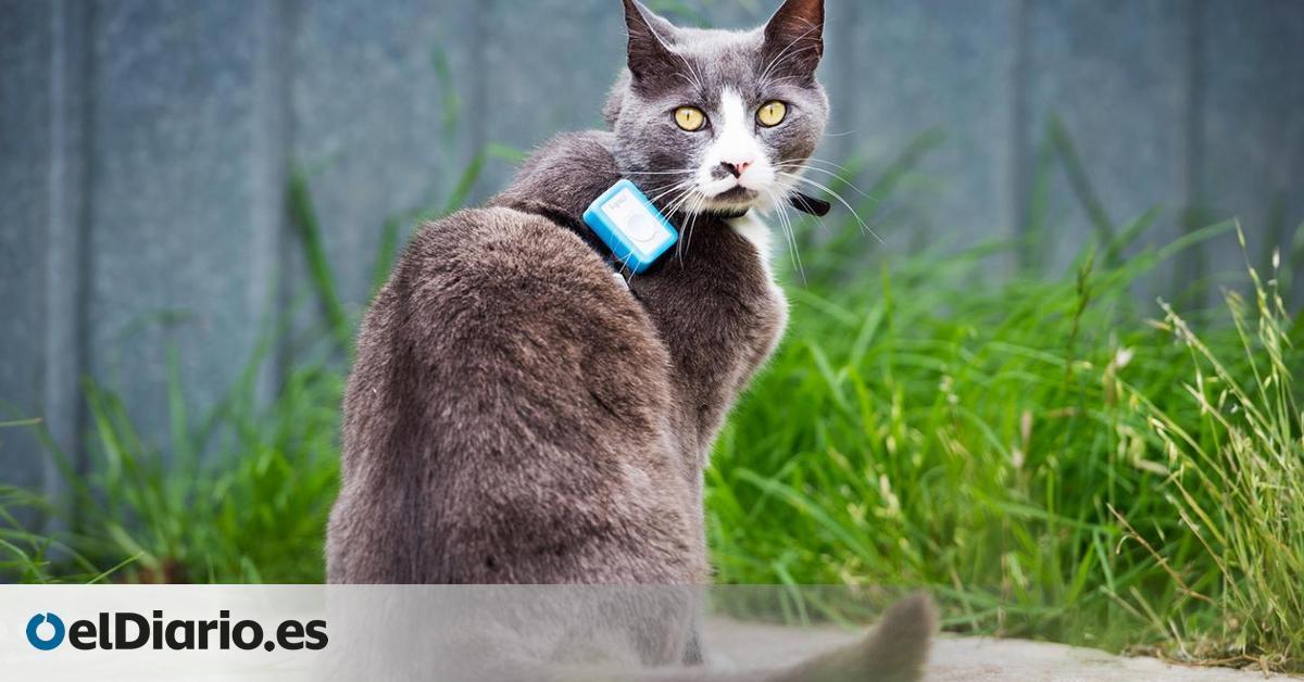 Los 925 gatos domésticos seguidos con GPS para analizar el impacto de estas mascotas en la fauna local