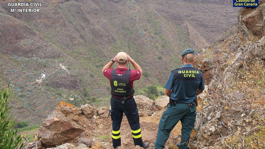 Agentes de Medio Ambiente del Cabildo de Gran Canaria y del Servicio de Protección de la Naturaleza (Seprona) de la Comandancia de la Guardia Civil en Las Palmas, durante el operativo.