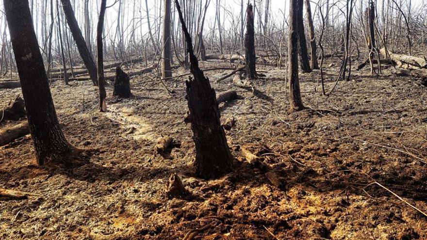 Más de 1.950 hectáreas arden en dieciséis incendios en Ourense y Lugo
