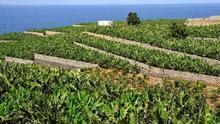 Canarias destina 3,5 millones de euros para impulsar la suscripción a los seguros agrarios combinados
