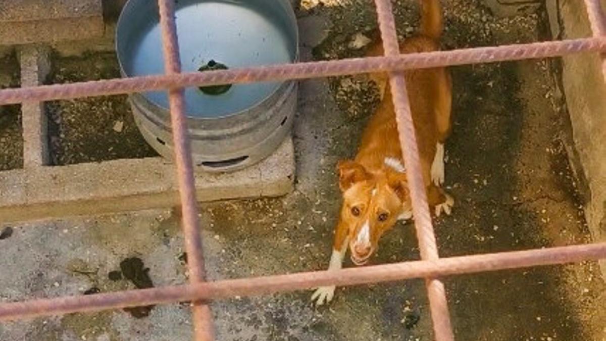 Imagen de archivo de un perro de una rehala
