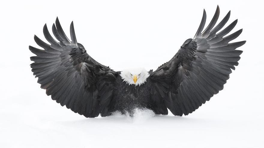 'Aterrizaje en la nieve'. Ganador de la categoría Portfolio Rising Star a fotógrafos menores de 18 años