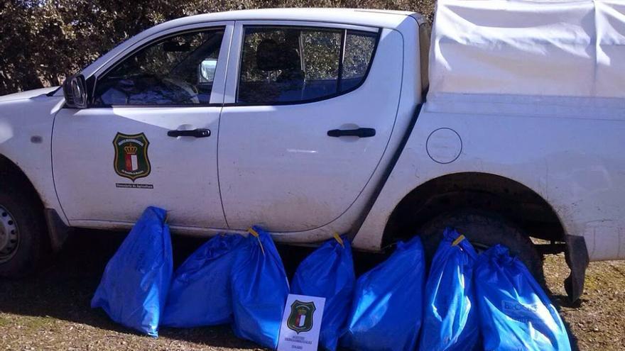 Siete buitres leonados recogidos muertos en Castilla-La Mancha / Foto: Agentes Medioambientales de Castilla-La Mancha