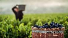 La vendimia vuelve a impulsar la bajada del paro en Castilla-La Mancha