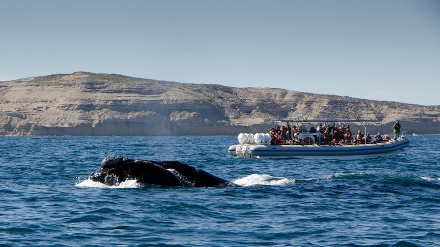 Avistaje de ballenas en el Golfo Nuevo. Pedro Alonso