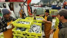 """Pesca estudia la fórmula """"más favorable"""" para el seguro colectivo ante las """"dificultades"""" en el procedimiento"""