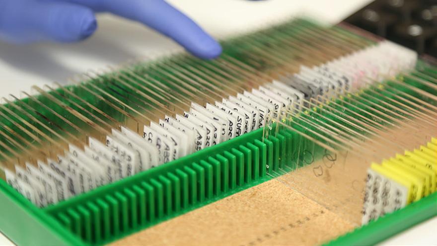 Mostres al laboratori del Vall d'Hebron Institut de Recerca / CC by vhir (Flickr)