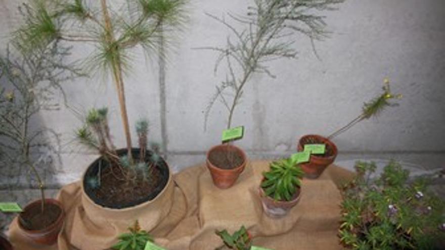 Ejemplares de vegetación mostrados en la exposición. (ACFI PRESS)