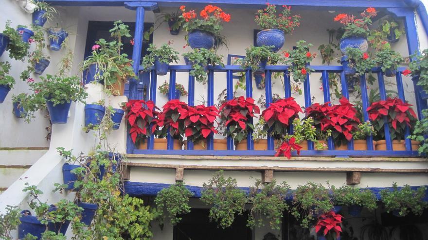 Los patios de Córdoba también florecen por Navidad.