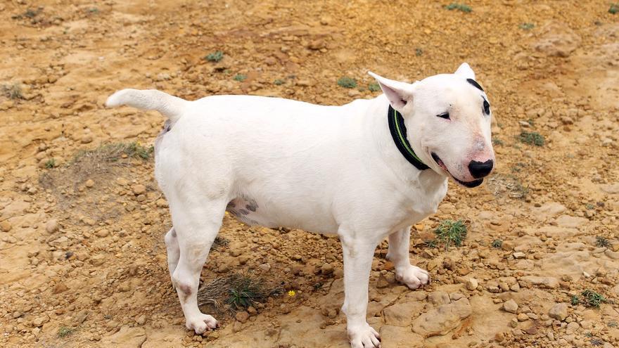 Para el dueño de Telmo, todos los perros deberían pasar un examen que dé fe del comportamiento ejemplar del can | Foto: BLANCA SÁINZ