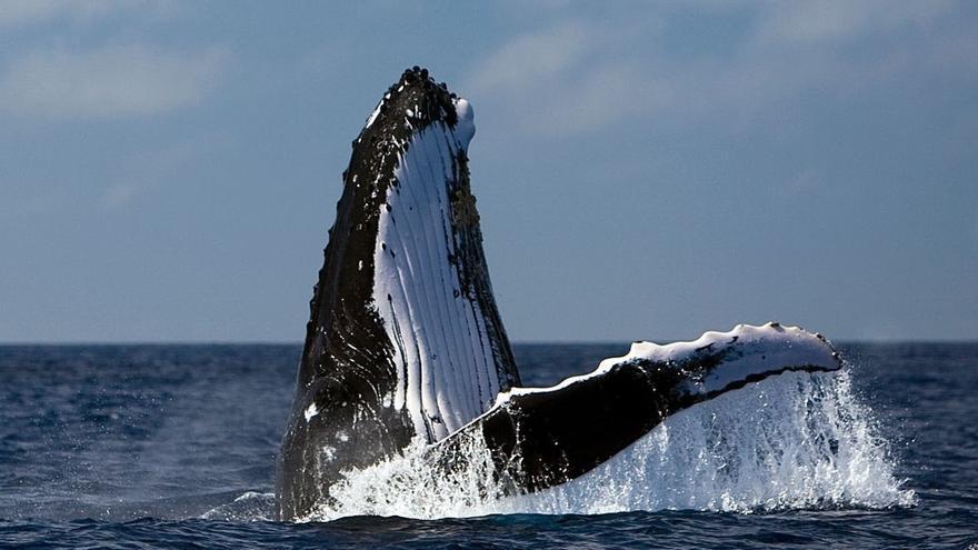 El Atlántico Sur ha sido el océano de mayor caza de ballenas / Greenpeace.