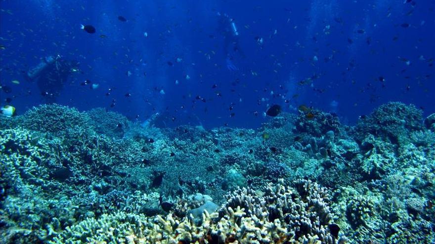 Los océanos tienen un valor económico de 24 billones de dólares, según WWF