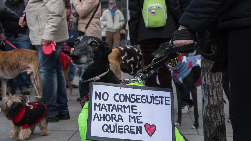 Galgo rescatado de la explotación de la caza, en la manifestación de 2016 convocada por la Plataforma NAC