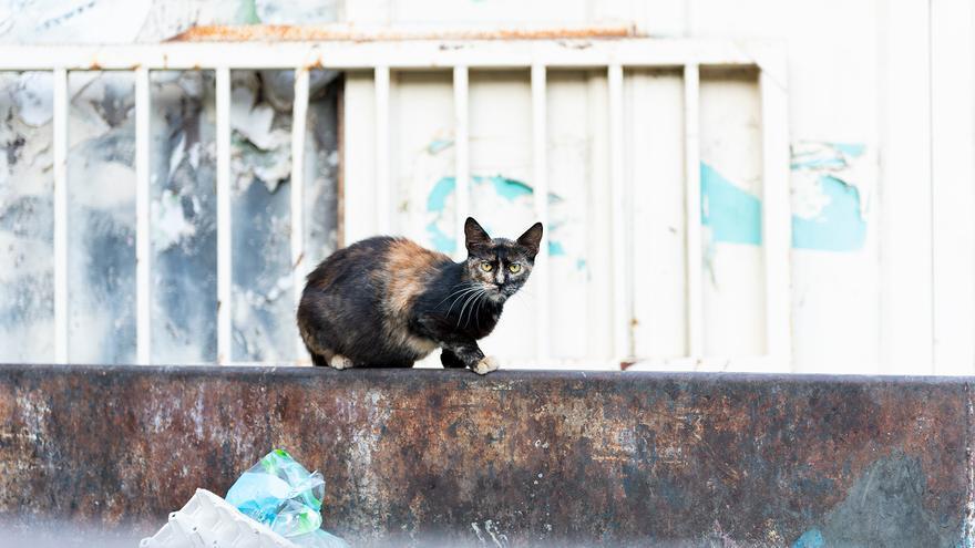 Gato callejero en Palestina