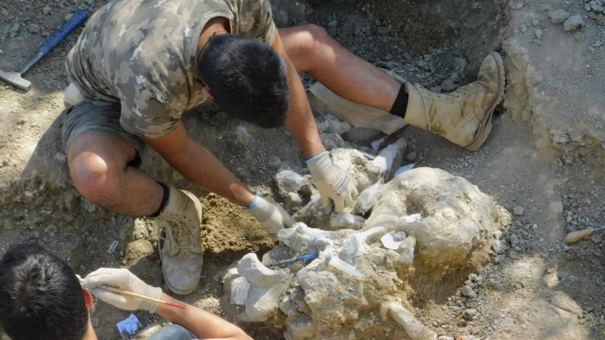 Excavaciones del Yacimiento de Torrelara (Burgos)
