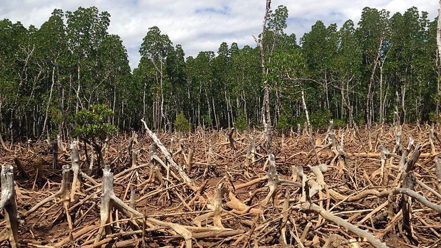 Deforestación en Madagascar.