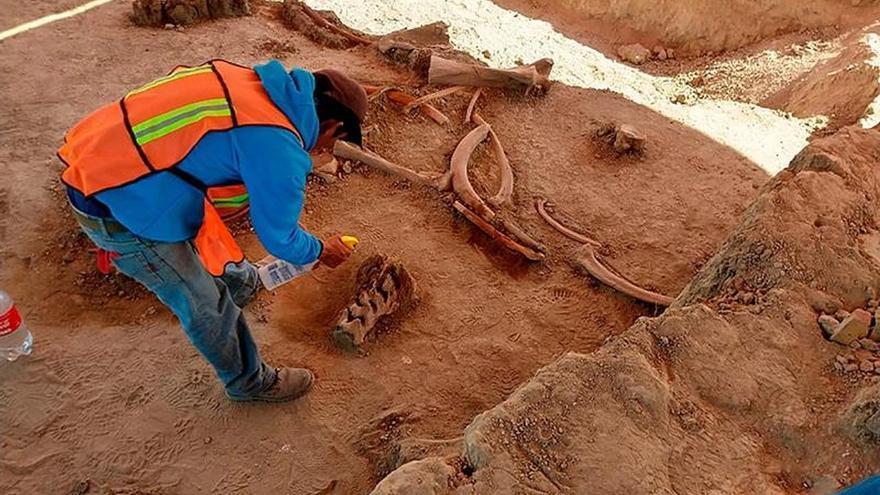 Hallazgo de 60 mamuts en futuro aeropuerto mexicano da pistas de su extinción
