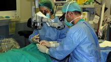 Intervención quirúrgica en un hospital del Servicio Canario de Salud. EFE