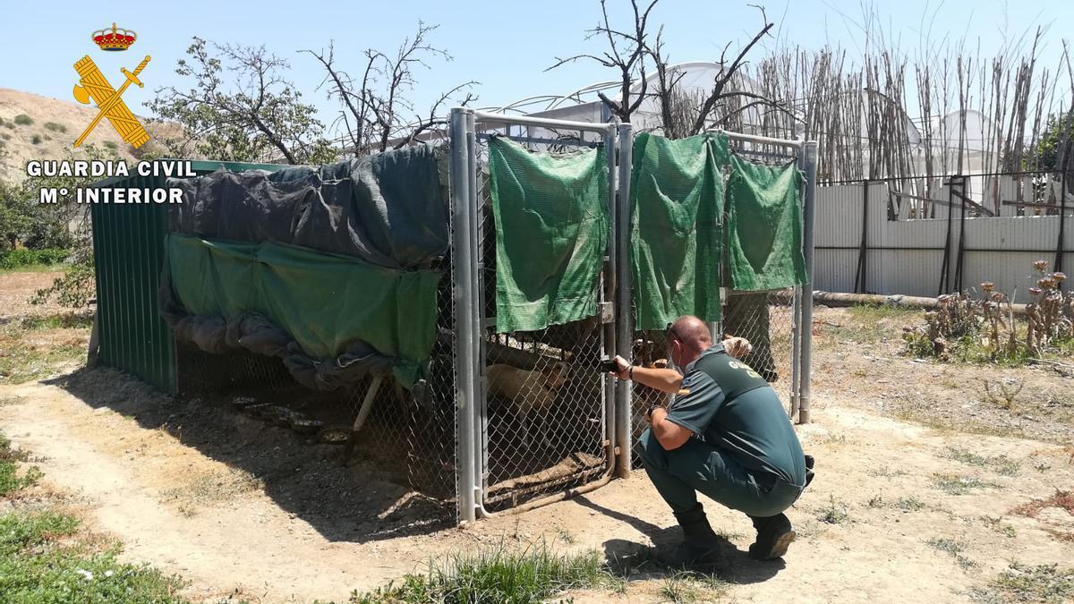 Un guardia civil, en la perrera donde vivía el animal