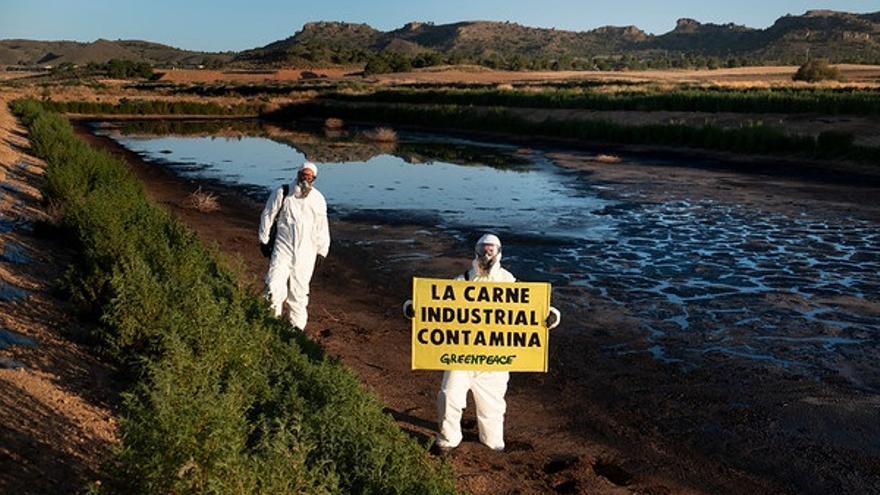"""Greenpeace entra en una macrogranja de cerdos de Hellín que considera  """"la más contaminante de España"""""""