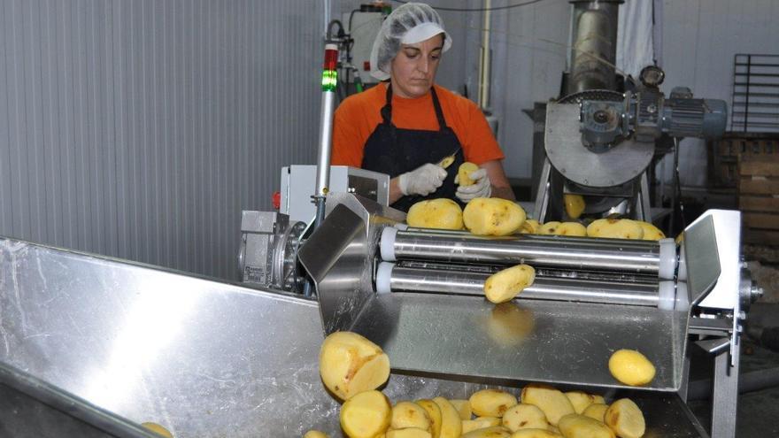 Cadena producción de Patatas San Nicasio en Priego de Córdoba.