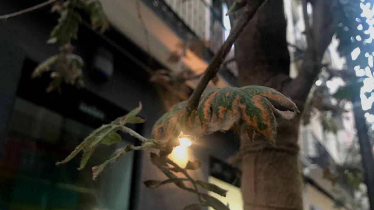 Detalle de una de las hojas enfermas | SOMOS CHUECA