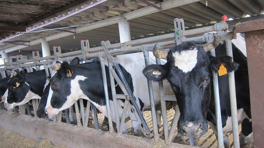 El precio de la leche en Cantabria baja un 6,8% en un año