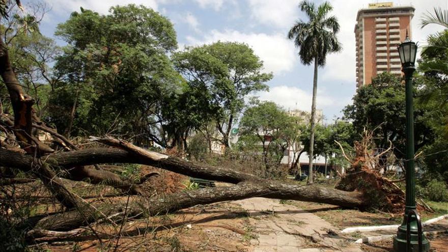 Cuatro muertos a causa de árboles derribados por una tormenta en el centro de Paraguay