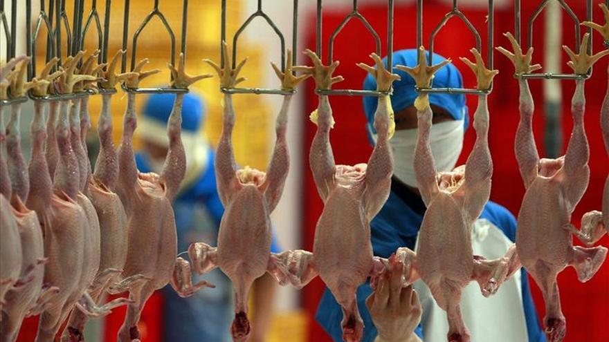 La OMC establece panel para resolver la disputa entre Brasil e Indonesia por el pollo