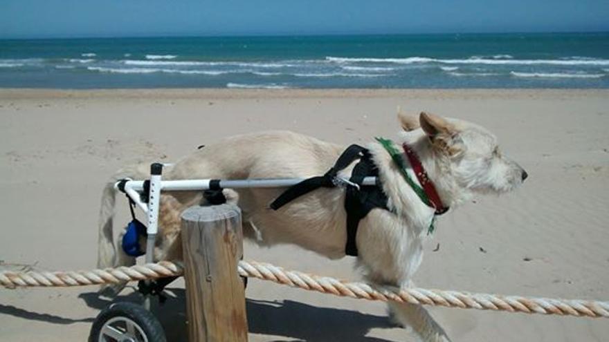 La perra MOMA, en una playa