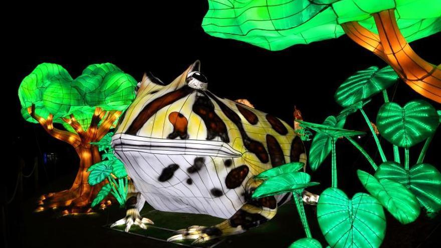 """Fotografía cedida por Jungle Island donde se muestra una gigante rana luminosa en la exhibición """"Luminosa, festival de las luces"""" que se ofrecerá en este popular parque de eco-aventura de Miami (Florida, EE.UU.) del 5 de octubre de 2019 al 8 de enero de 2020."""