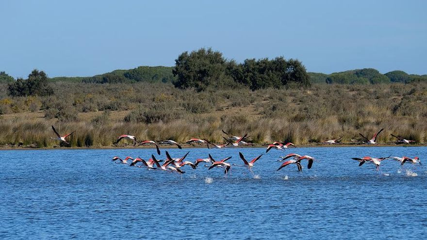lamencos alzando el vuelo en la laguna Santa Olalla. Laguna permanente.