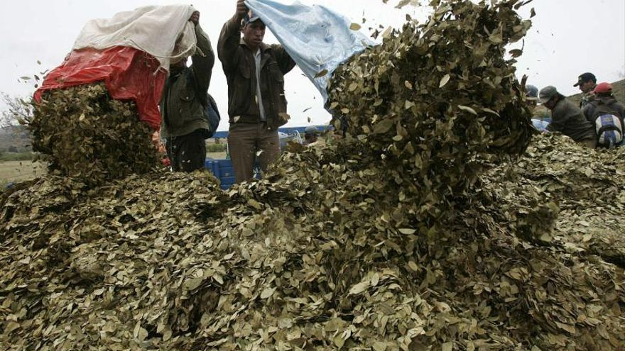 Las FARC proponen estimular usos lícitos de cultivos de coca con control estatal