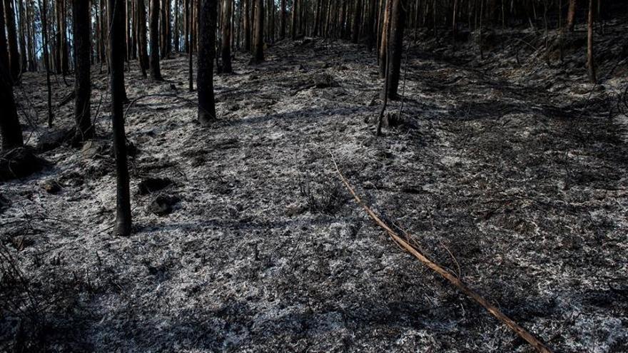 """""""Cultura del fuego"""", el germen de los incendios"""